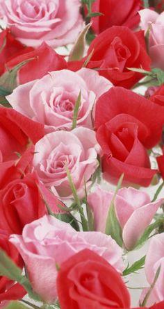 60 bästa färgkombinationer - röda, vita och rosa bilder    Rosa, röd.
