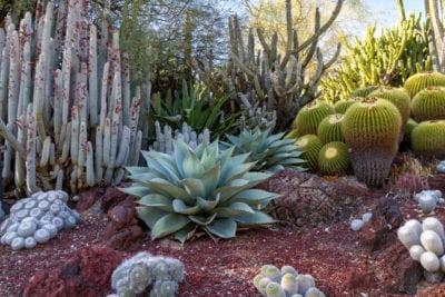 Desert Garden Ideas - Tips för sydvästra landskapsarkitektur och utomhus.