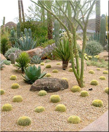 Pin på Desert Gardeni