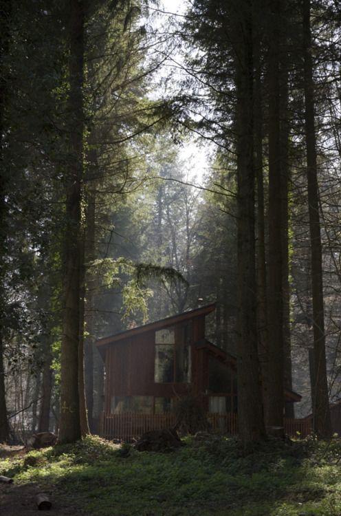gnostisk skog: Jag kan inte ens beskriva med ord hur glad jag skulle vara.