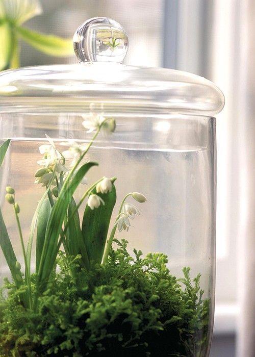45 bedårande vårterrarier för heminredning |  Planten.