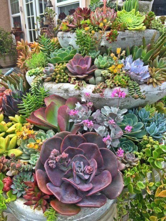 30+ Succulent Garden Ideas inomhus och utomhus för trädgård.