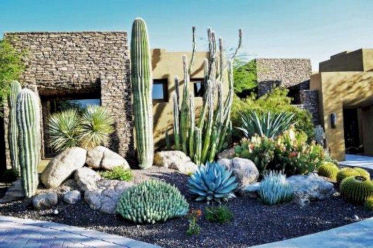 46 underbara Desert Garden designidéer för din trädgård |  Tillbaka.