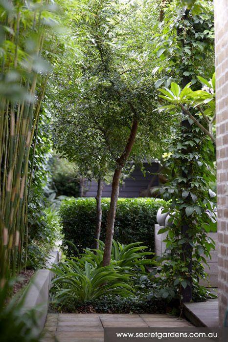 Kensington Landscape Design av Secret Gardens - Sydney Landscape.