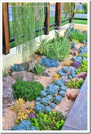 Återbesöka Sue's saftiga trädgård |  Suckulent trädgårdsdesign.