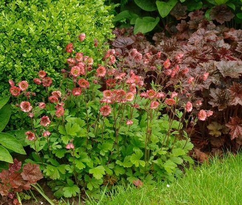 Badrumsdesignidéer med växter och blommor