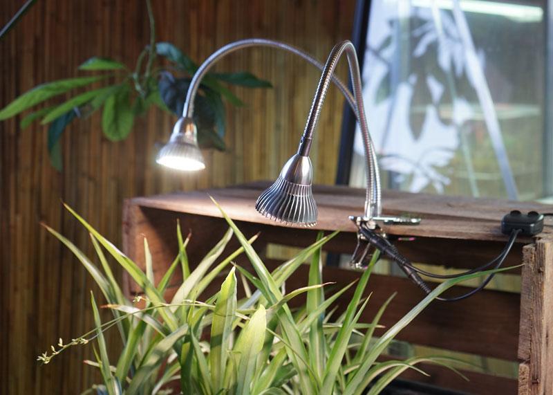Blomma och växtinspirerade lampor
