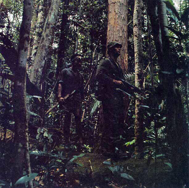 Fjärran regnskog reträtt